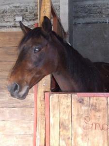 animali_cavalli_vallechiappella_agriturismo